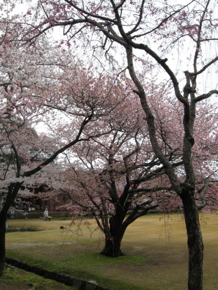Japan - a goal reached