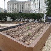 Urban gardening in DC